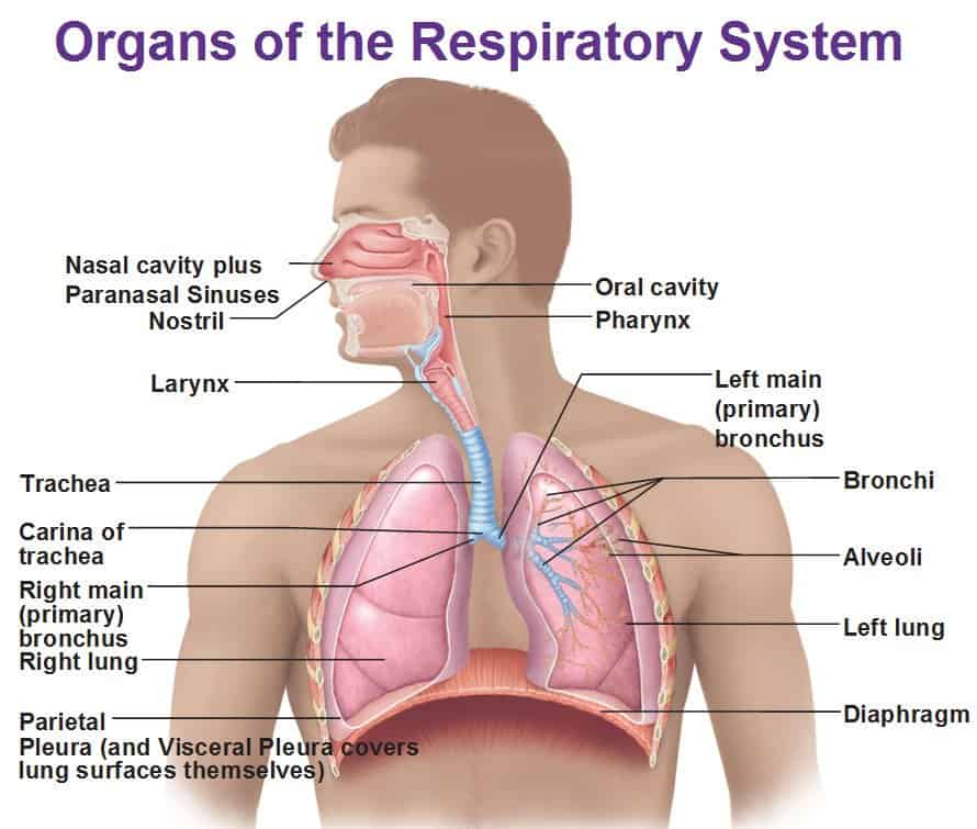 Why you must detox all the time part 23 how to fine tune your respiratory tract ccuart Choice Image