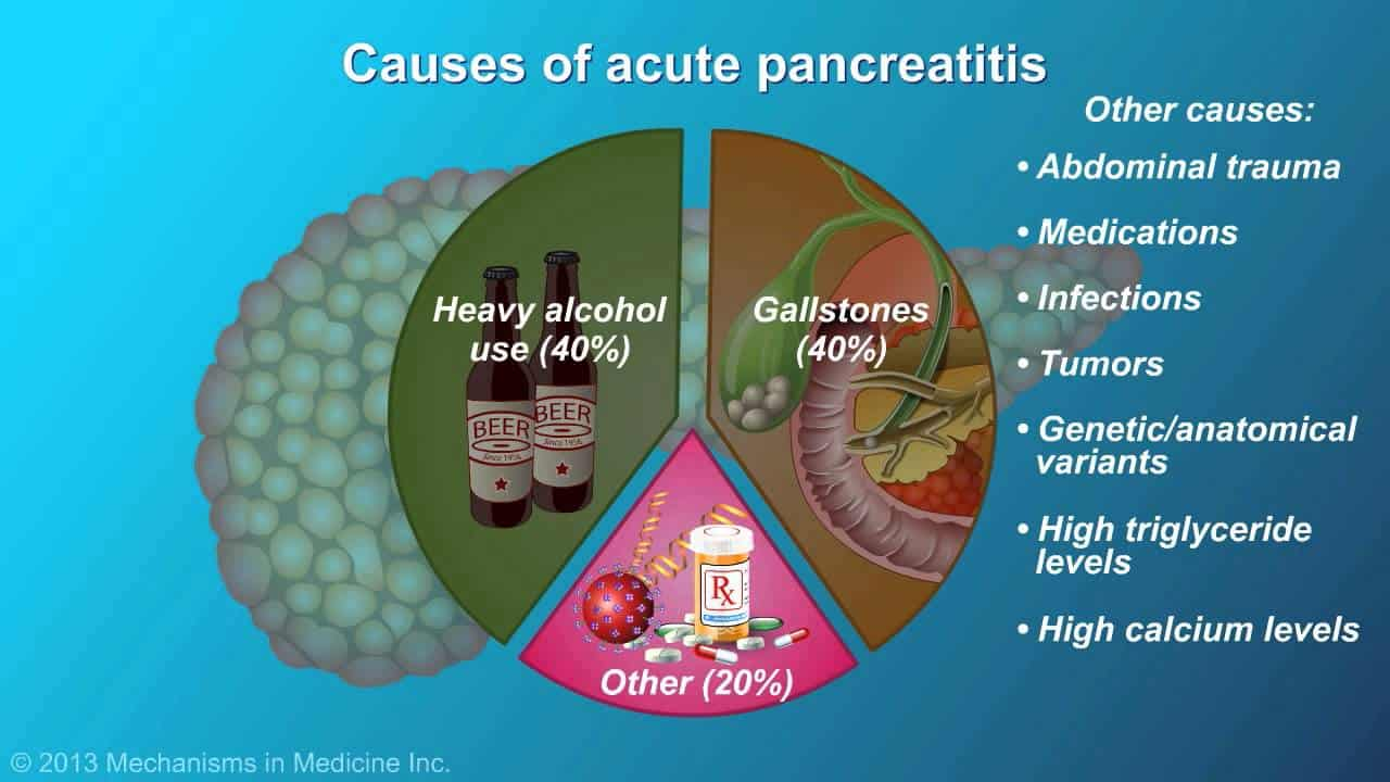 an in depth review of the functions of the pancreas The pancreas' second, exocrine function is to produce and release digestive fluids after food enters the stomach, digestive enzymes called pancreatic juice travel through several small ducts to the main pancreatic duct and then to the bile duct, according to the medical university of south carolina's digestive disease center.